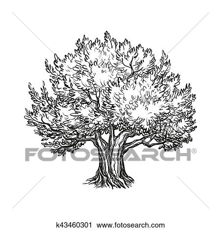 Vector Illustration Of Olive Tree Clipart K43460301 Fotosearch