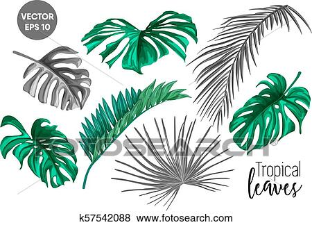 Vector Tropical Leaf Monstera Palm Monochrome Set Clip Art K57542088 Fotosearch It means that you can use and modify it for your personal and commercial projects. vector tropical leaf monstera palm