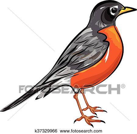 clip art of american robin bird vector k37329966 search clipart rh fotosearch com robin clipart black and white robin clipart images