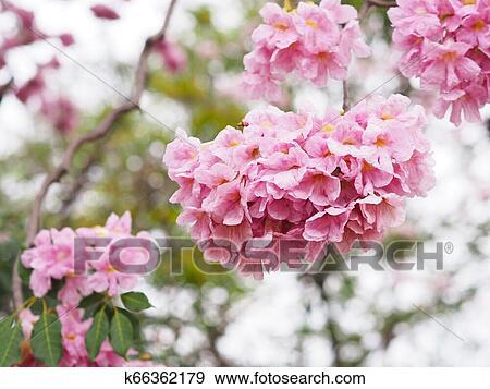 Pink trumpet flowers for springtime or summer. Nature background.