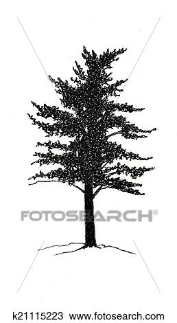 Ink Black White Drawing Of A Pine Tree