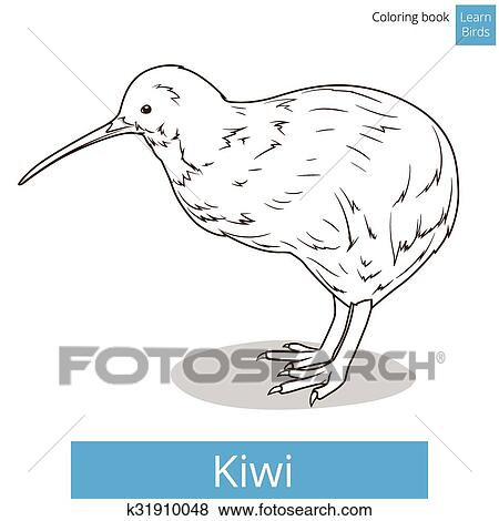 Kiwi Learn Birds Educational Game Coloring Book Vector Illustration