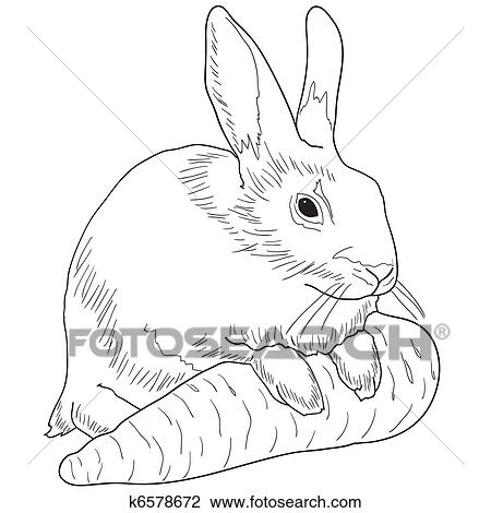 Rabbit With A Carrot Drawing K6578672 Fotosearch