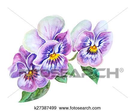 Stock illustration of tender pansies flowers k27387499 search tender pansies flowers isolated on white watercolor painting mightylinksfo