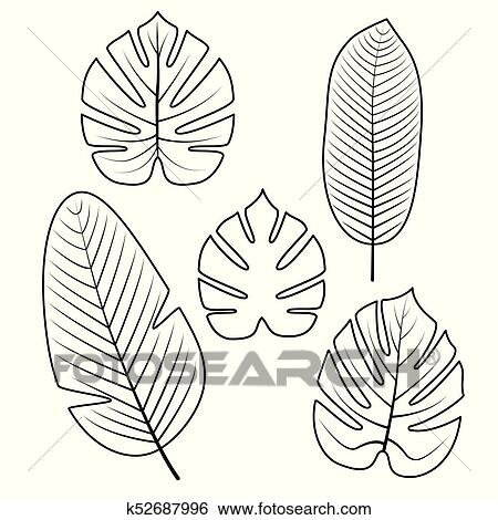 Clip Art - tropical, hojas, collection., vector, illustration ...