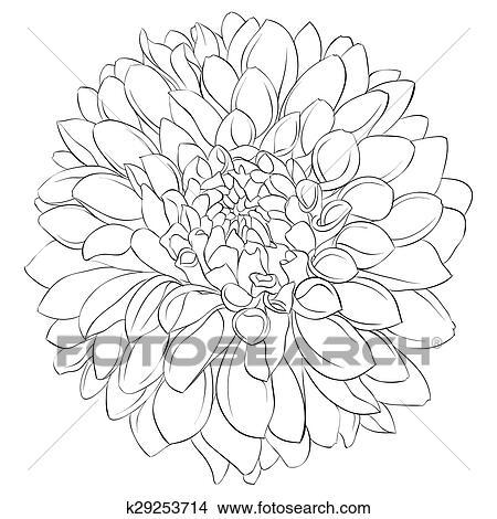 Hand drawn dahlia flower. black and white, vector illustration.