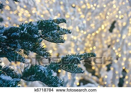 A fir tree with snow and white christmas lights in background - Stock Photo Of Snow On Fir Trees With Christmas Lights In Background