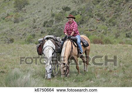 Pferd Weiblich