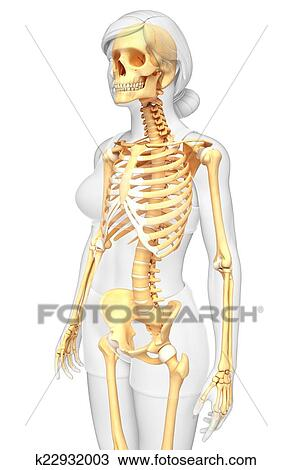 Drawing Of Human Skeleton Side View K22932003 Search Clipart