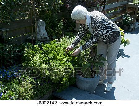 Grandma Taking Parsley From The Garden