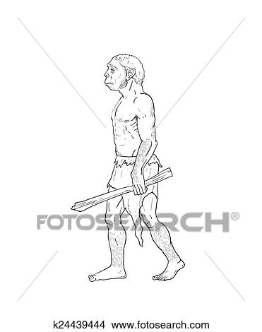 Drawings Of Human Evolution Illustration K24439444 Search Clip Art