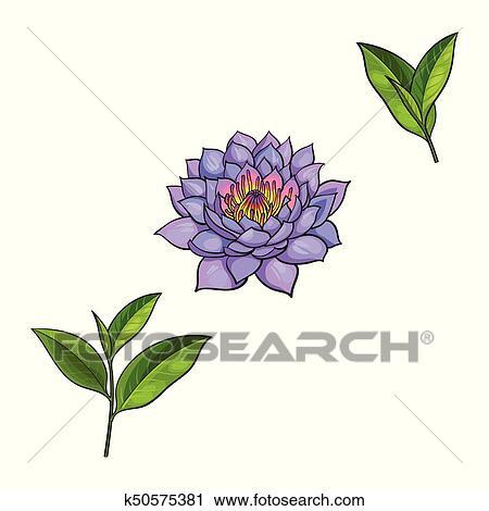 Clipart Of Vector Sketch Lotus Flower Tea Leaves Set K50575381