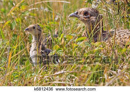 Εμφάνιση φωτογραφίες πουλί σας φαλακρός μουνί