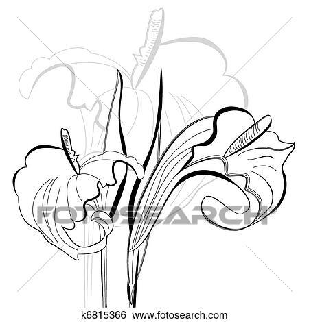 Monochrome Illustration Calla Lilies Flowers Clip Art K6815366
