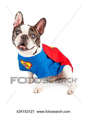 Bulldog francese cane in eroe super costume archivio immagini