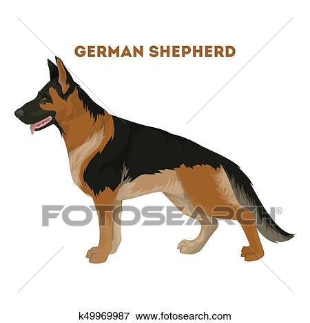 Clip Art Of German Shepherd Dog K49969987 Search Clipart - German-shepherd-drawings