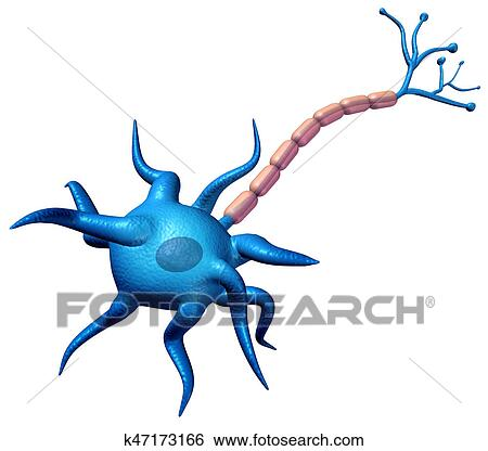 Stock Illustration of Synapse Neuron Body Anatomy k47173166 - Search ...