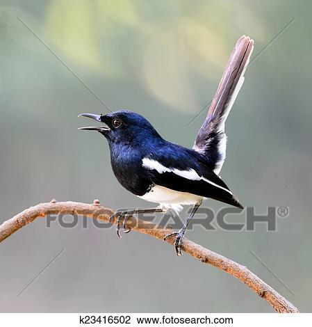 ευθεία φωτογραφίες πουλί γκέτο ερασιτεχνικό πορνό κανάλι