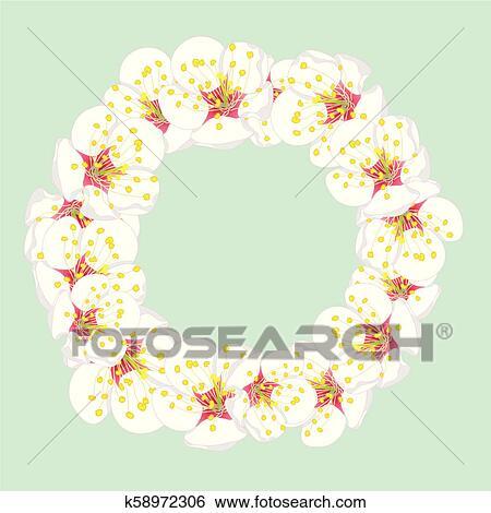 Clip Art Of White Plum Blossom Flower Wreath On Green Mint2