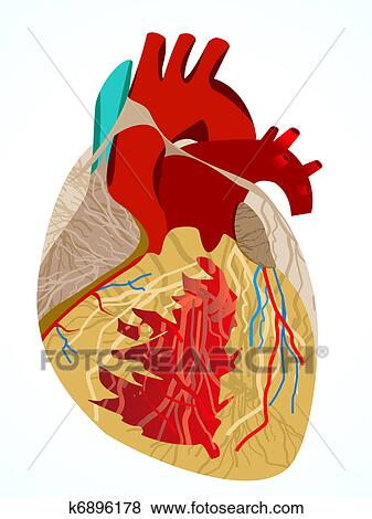 Abstract Human Heart Stock Illustration K6896178 Fotosearch