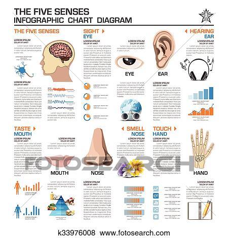 Clip Art Of The Five Senses Infographic Chart Diagram K33976008