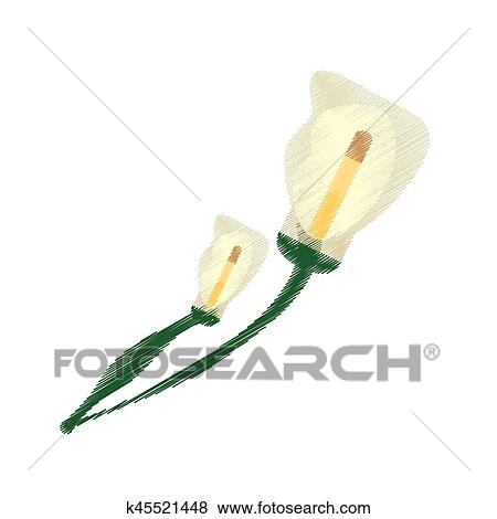 Drawing Calla Lily Flower Ornament Image Clip Art K45521448