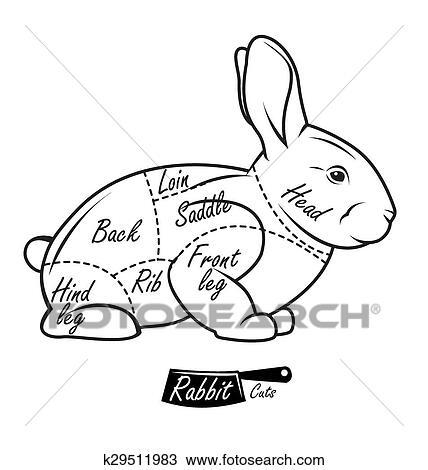 Diagram Rabbit Meat Vector Clip Art Royalty Diagram Schematic