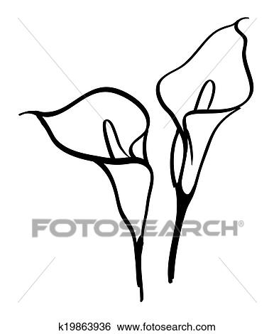 Black Silhouettes Of Calla Lilies Vector Ilration On White Background