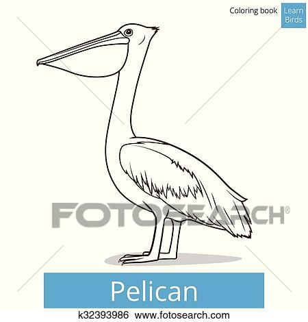 Clip Art of Pelican bird learn birds coloring book vector k32393986 ...