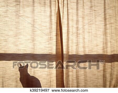 Beeld - een, kat, achter, gordijn, ondergaande zon k39219497 - Zoek ...