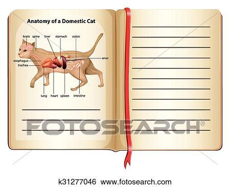 Clip Art - anatomía, de, un, gato doméstico k31277046 - Buscar Clip ...