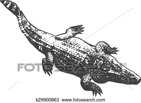 huge crocodile thick black contour on white background top view vector clipart k29900863 fotosearch fotosearch