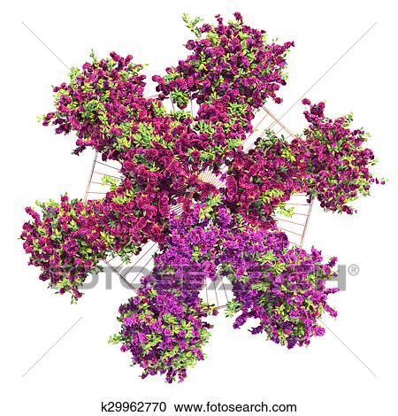 Stock illustrations of large bush flowers pergola k29962770 search bushes purple flowers on a white background with green leaves gazebo with ivy pergola mightylinksfo