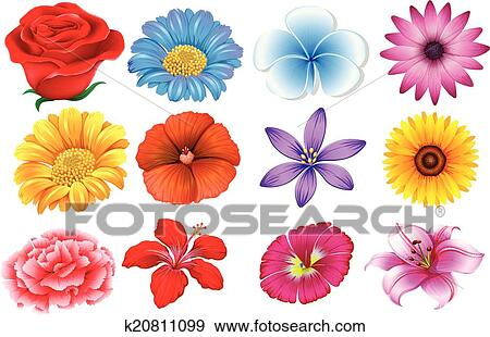 Set of different flowers Clip Art | k20811099 | Fotosearch