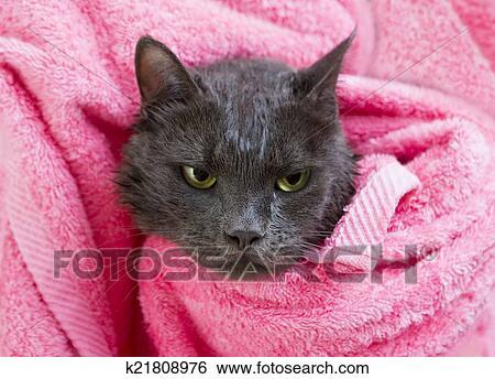 Nero vecchio bagnato micio