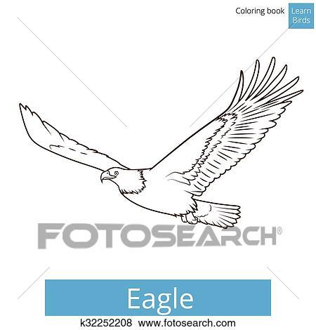 Clip Art - águila, aprender, aves, libro colorear, vector k32252208 ...