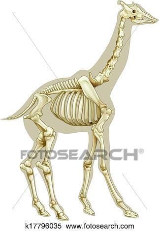 Giraffe Skeletal System Clipart K17796035 Fotosearch