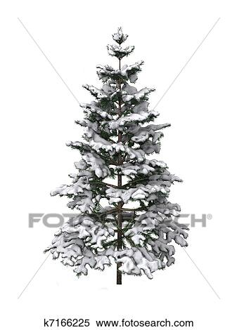 stock illustration of pine tree covered in snow k7166225 search