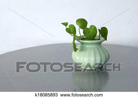 Stock Photo Of Green Plants In Small Vase On Table Golden Pothos