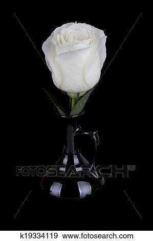 Strabiliante Rosa Bianca In Nero Vaso Su Sfondo Nero Archivio
