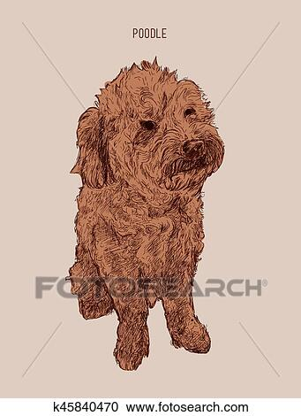 Poodle Dog Vector Illustration Hand Drawn Dog Sketch Clipart