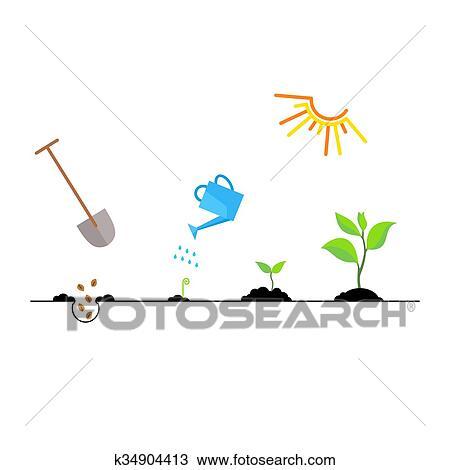 clipart of timeline infographic of planting tree process k34904413