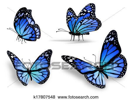 Ilustrace Z Mnoziny Ctyri Konzervativni Motyl K17807548 Hledat