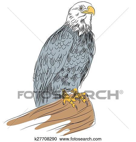 bald eage sketch clipart  k27708290  fotosearch