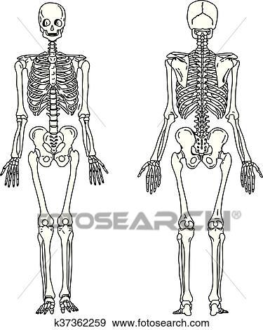 Clip Art - ilustración, vector, mano, empate, doodles, de, esqueleto ...