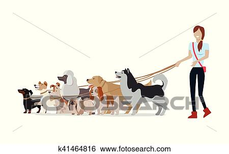 Dog Walking Banner Woman Walk With Different Dogs Clip Art K41464816 Fotosearch