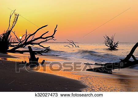 Stock Photo South Carolina Boneyard Beach Fotosearch Search Images Poster Photographs