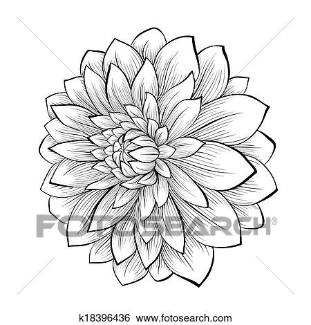 Dahlia Drawing Flower Black And White Clip Art Transparent PNG