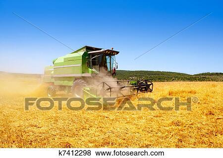 b8aade5f7e Immagine - mietitrebbiatrice, raccolta, frumento, cereale. Fotosearch -  Cerca Archivi fotografici,