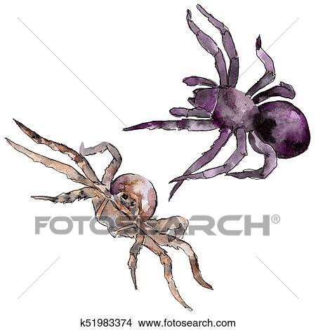 Colección de foto - exótico, tarántula, salvaje, insecto, en, un ...